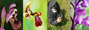 Fotografía Orquídeas