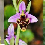 orquídeas BabelNature